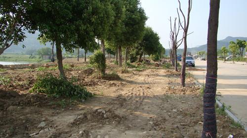 东至县尧渡河滨河绿地景观工程